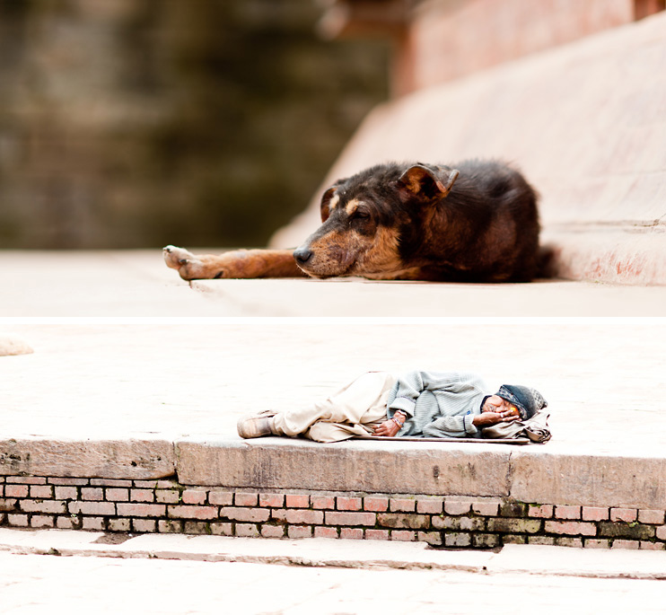 Bhaktapur, Dog, Durbar Square, Homeless, Nepal