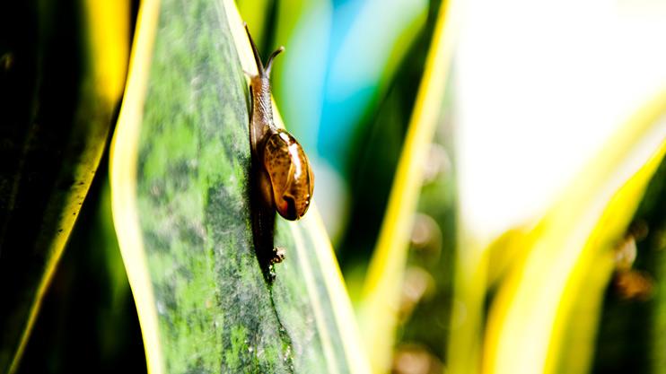 Leaf, Nepal, Plant, Rest Stop, Snail
