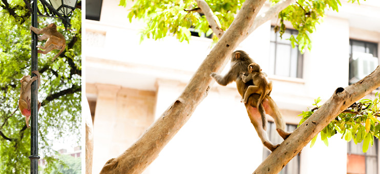 India, Lamp Post, Monkey, New Delhi