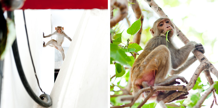 India, Monkey, Varanasi