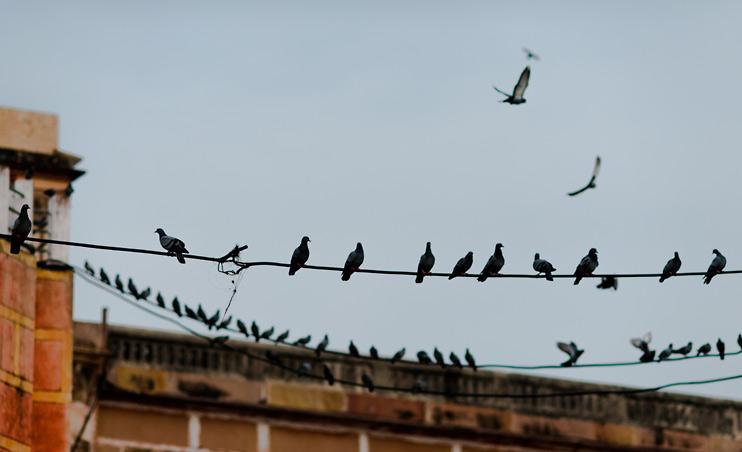 Bird, India, Varanasi