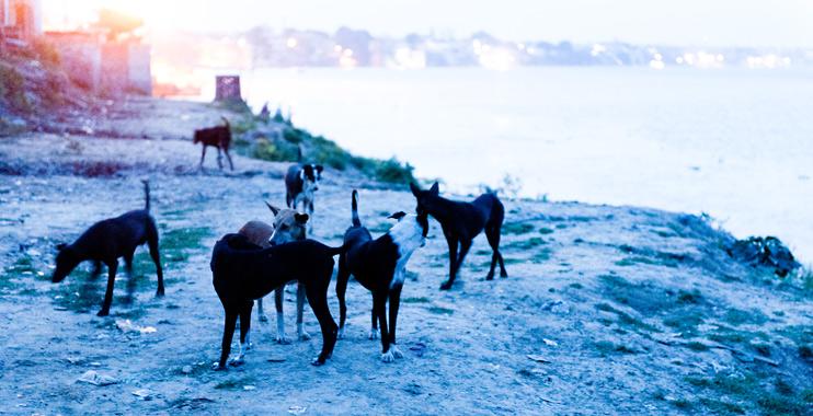 Dog, India, Varanasi