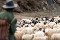 Friendship Highway, Sheep, Shepherd, Tibet