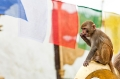 Kathmandu, Monkey, Monkey Temple, Nepal, Prayer Flags, Swayambhunath