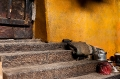 Door, Drepung Monastery, Kitchen, Lhasa, Steps, Tibet