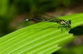 Dragon Fly, Leaf, Nepal, The Last Resort