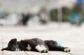 Dog, Shigatse, Tibet