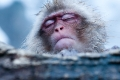 Japan, Snow Monkeys, Yamanouchi