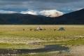 Clouds, Donkeys, Field, Nomads, Tibet, Tingri, Water