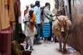 Alley, Cow, India, Varanasi